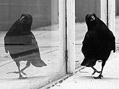 Bird Shadow 06