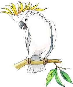 Cockatoo 01