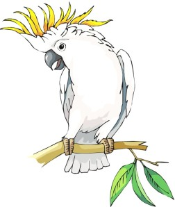 Cockatoo 01