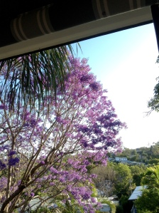 Jacaranda in Afternoon