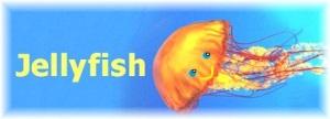 Jellyfish 03