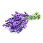 Lavender 01