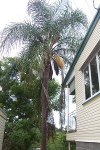 Palm Blossom 001