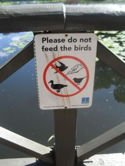 Beware of the Duck
