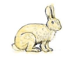 Rabbit 09