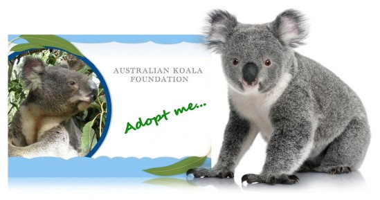 Koala Adoption Certificate (1)