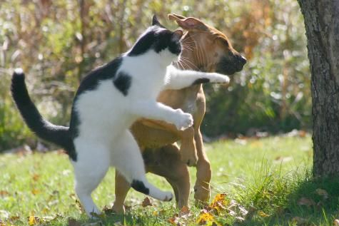 Fighting Cat & Dog