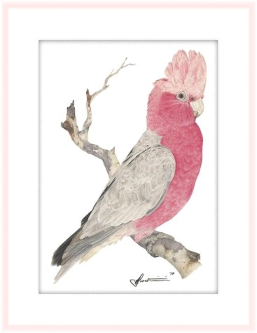 The Lucky Galah Painting