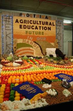 Ekka Fruit and Vegetable Display 04