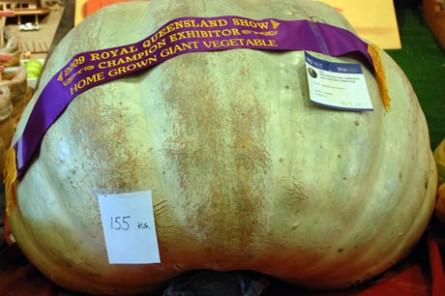 Ekka Homegrown Prize Winning Pumpkin