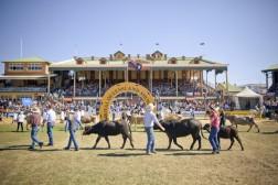 Ekka Showground Grand Parade 02