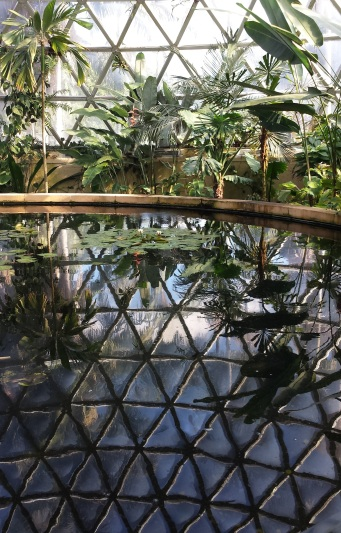 Tropical Display Dome at Brisbane Botanic Gardens, Mt Coot-tha, is a large lattice structure (geodesic) displaying plants from the tropics. A pathway winds upwards through the dome building, wrapping around a central pond with water plants.