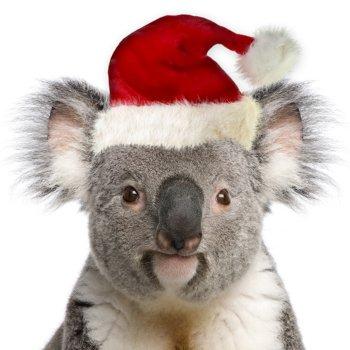 Christmas Koala 001