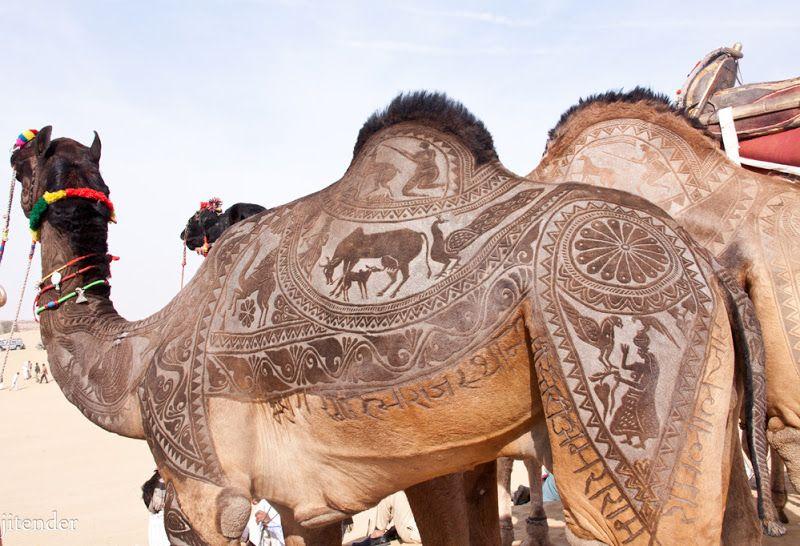 Camel Haircuts Designer Shearing