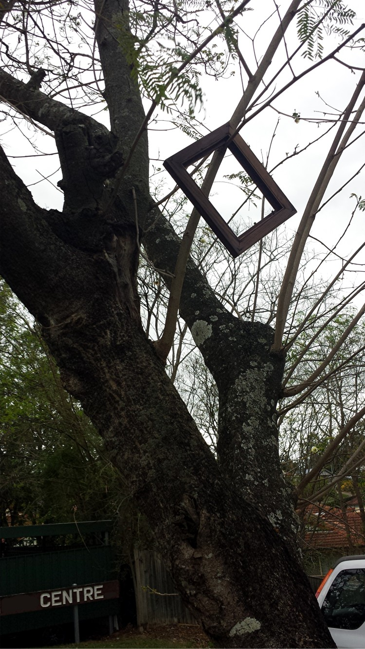 Gemma's Photograph of Picture Frame Up Tree