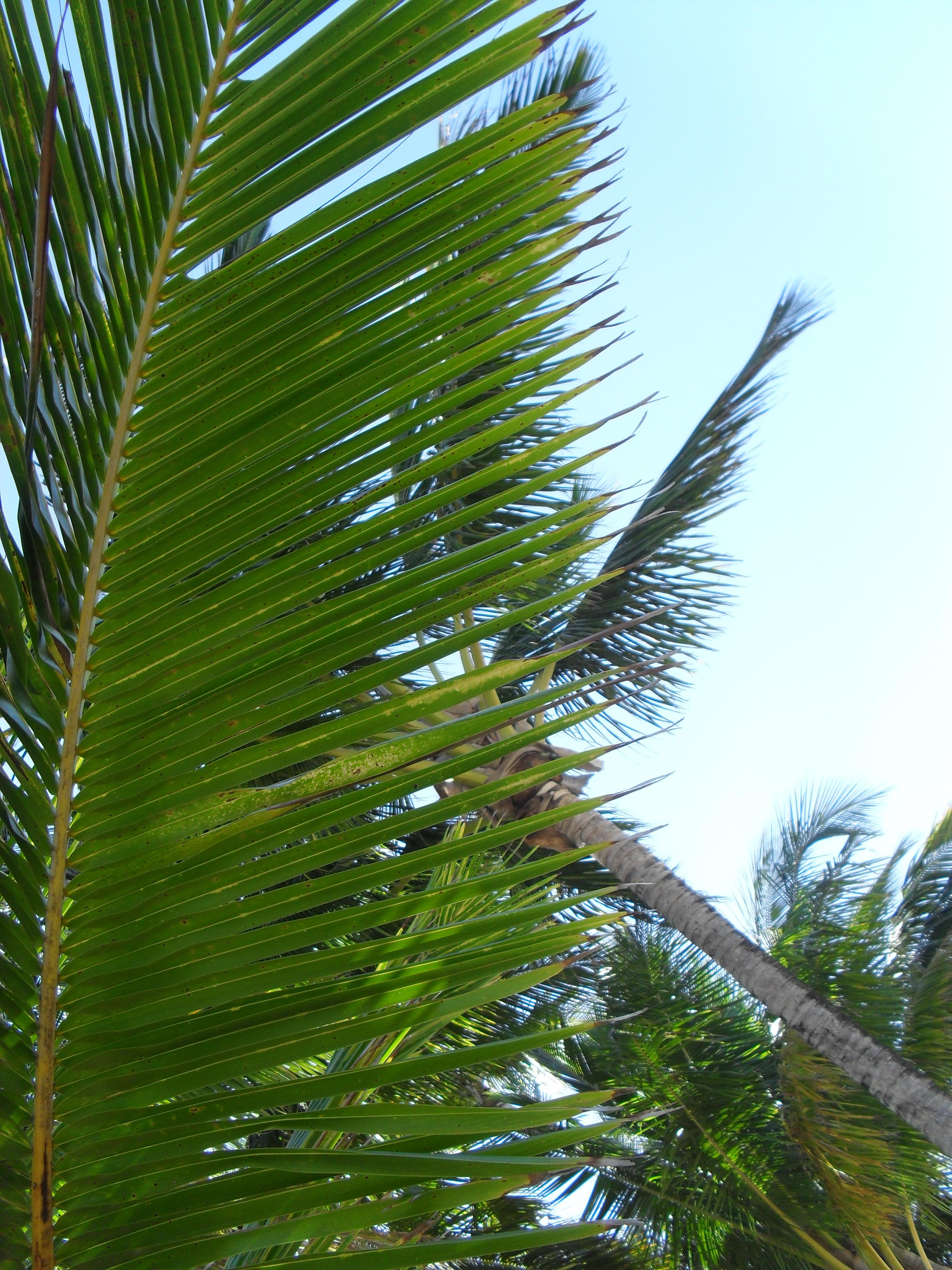 Palm Tree Palm Sunday 2019