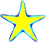 Star Fish 02