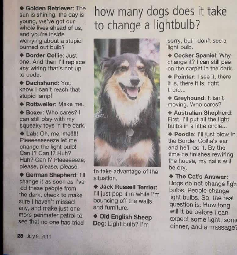 How Many Dogs To Change Light Bulb